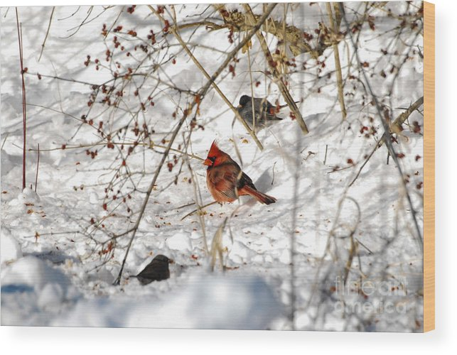Cardinal Wood Print featuring the photograph Berries And Sunshine by Robert Smice