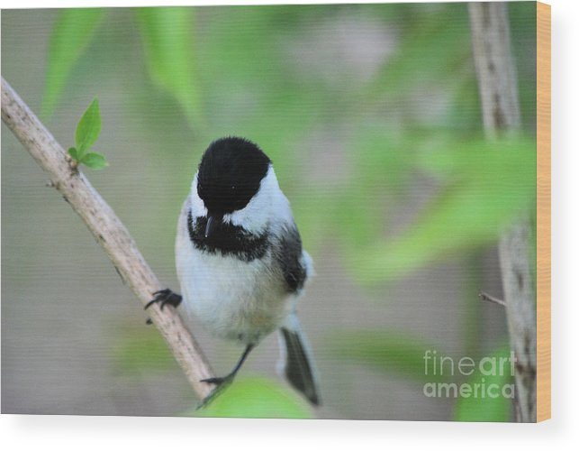 Bird Wood Print featuring the photograph Bird by Tim Hauser