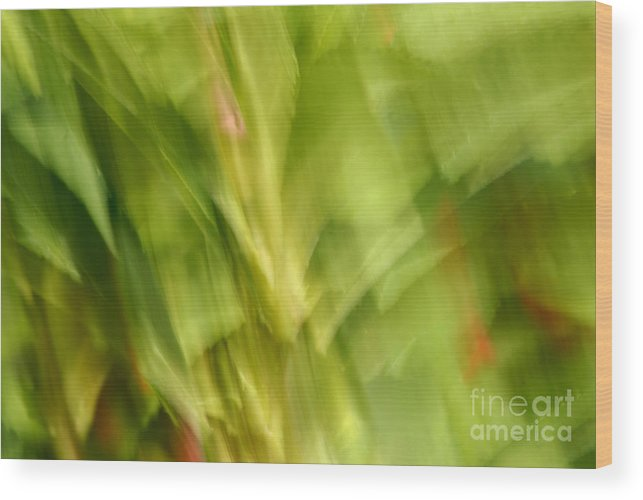 Blurred Motion Wood Print featuring the photograph Blowing In The Breeze by Paul W Faust - Impressions of Light