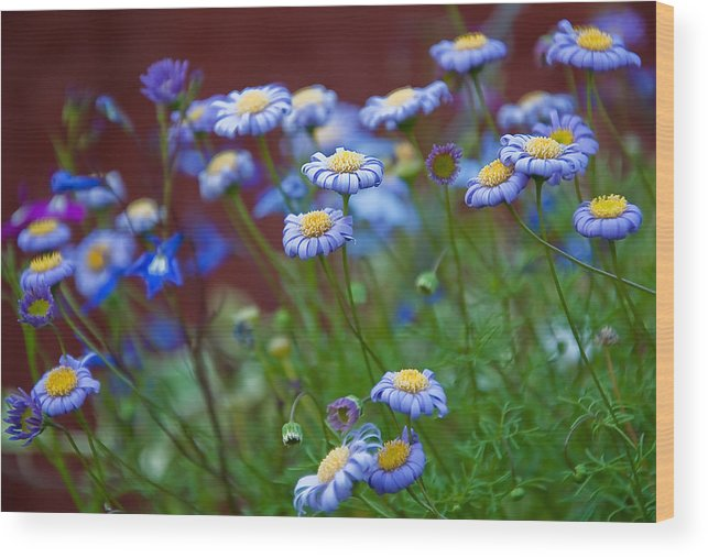 Blue Wood Print featuring the photograph Blue Flowers by Nataliya Pergaeva