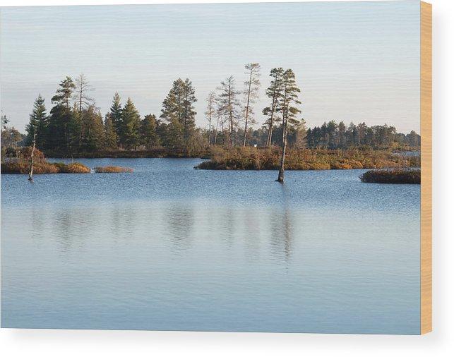 Wetland Wood Print featuring the photograph Blue Shades by Linda Kerkau