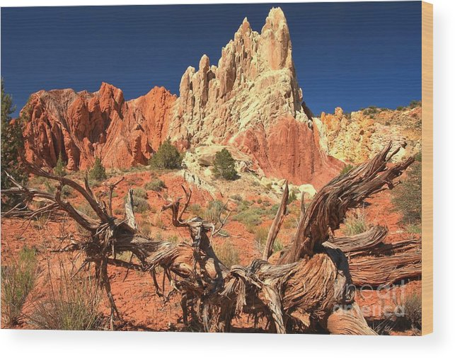 Cottonwood Road Wood Print featuring the photograph Bright And Twisted by Adam Jewell