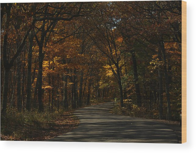 Brown County State Park Wood Print featuring the photograph Brown County State Park by Dan McCafferty