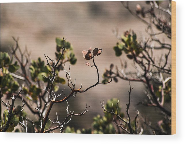 Leaf Wood Print featuring the photograph Brown Leafs by AR Harrington Photography