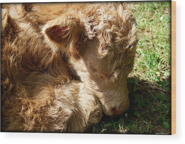 Cow Wood Print featuring the photograph Buffie by Kathy Sampson
