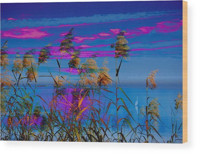 Sunrise Wood Print featuring the photograph Common Reeds At Sunrise by Michele Kaiser