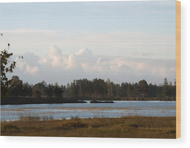 Wetland Wood Print featuring the photograph Day Of Beauty by Linda Kerkau