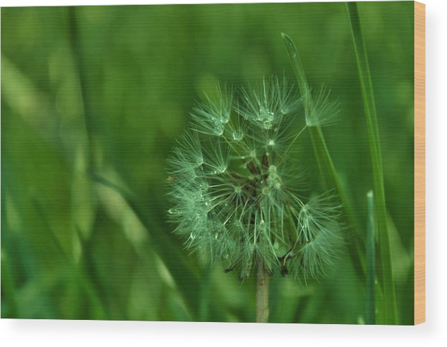 Nature Wood Print featuring the photograph Emeralds by Anna McAlister