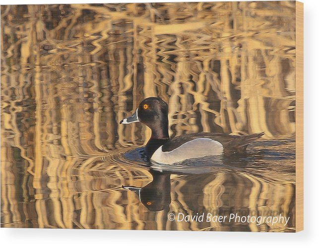 Wood Print featuring the photograph Evening Swim by David Baer
