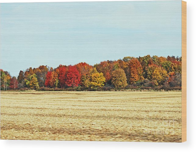 Fall Field Wood Print featuring the photograph Fall Field by Tim Hauser