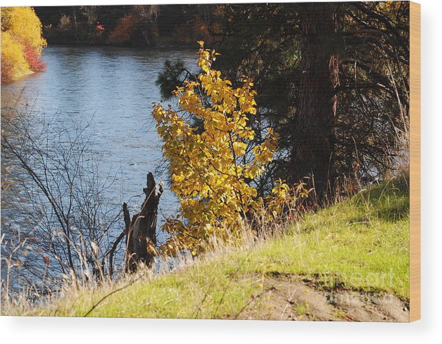 Wood Print featuring the photograph Fishing Spot by Brandon Finister