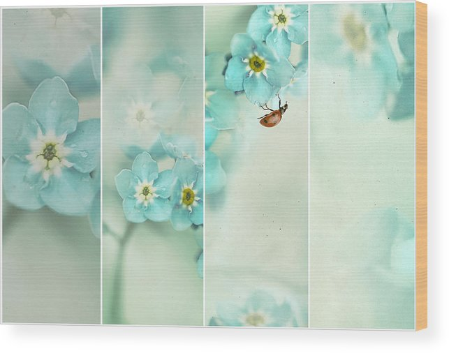 Teal Wood Print featuring the photograph Forget Me Not..... by Ellen Van Deelen