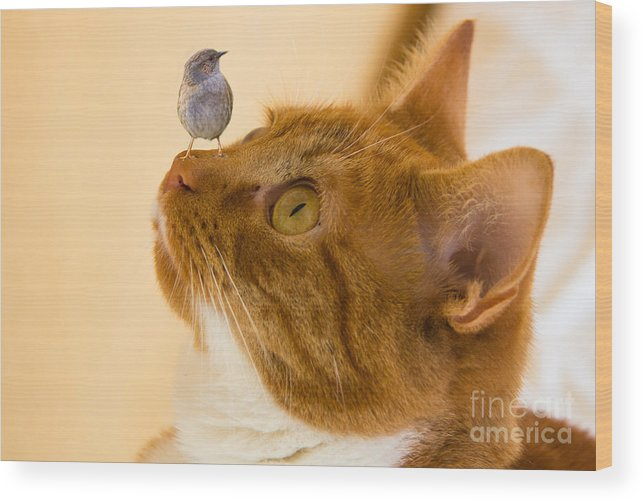 Animals Wood Print featuring the photograph Friend Or Foe by Brian Roscorla