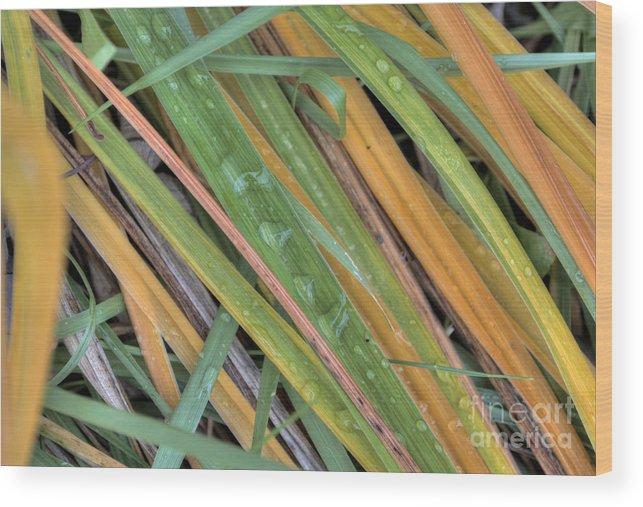 Grass Wood Print featuring the photograph Grass Droplets by Deborah Smolinske