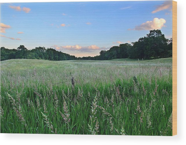 Field Wood Print featuring the photograph Hebron Field by Andrea Galiffi