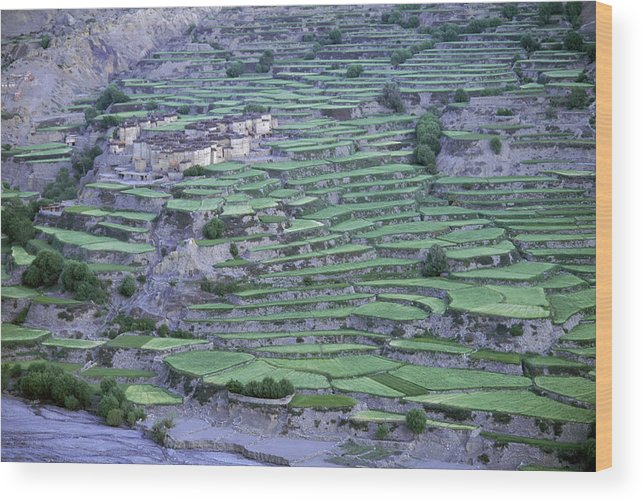 Asia Wood Print featuring the photograph Hill Modified For Agriculture, Tetang by Robert Caputo