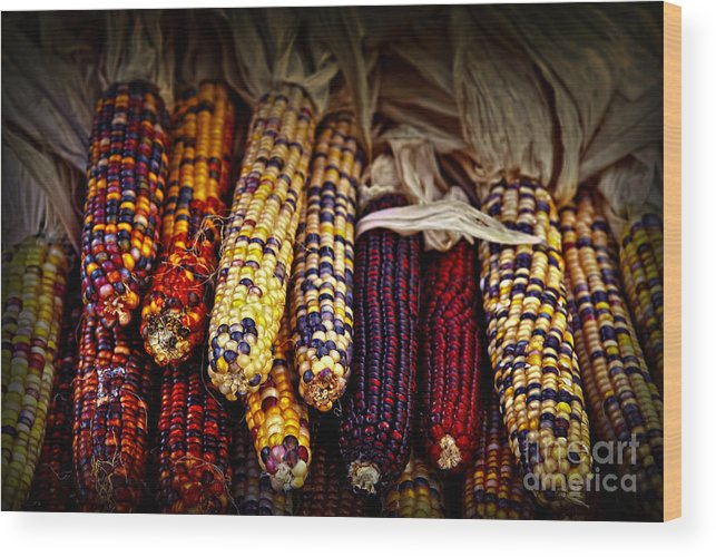 Corn Wood Print featuring the photograph Indian Corn by Elena Elisseeva