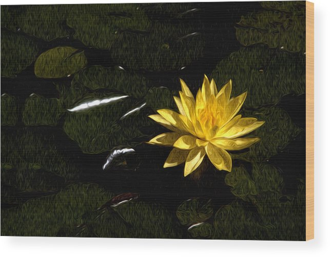 Lily Pad Wood Print featuring the photograph Lily Pad by Xavier Cardell
