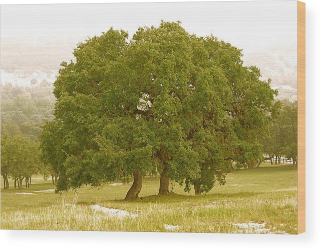 Live Wood Print featuring the photograph Lone Oaks by Gary Richards