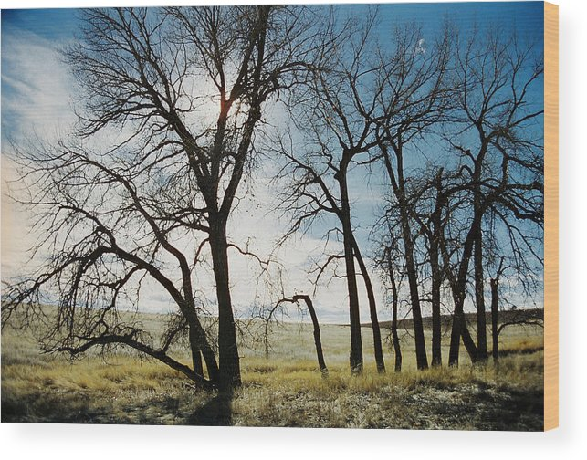 Trees Wood Print featuring the photograph Make A Stand by Ric Bascobert