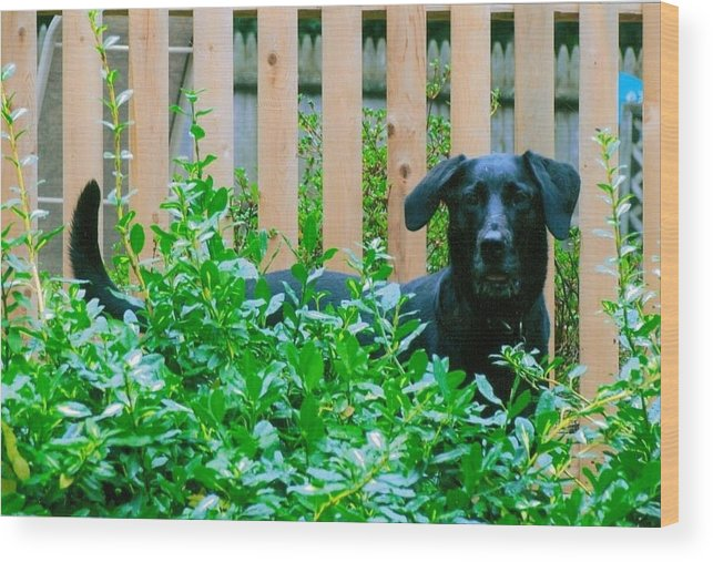 Dog Wood Print featuring the photograph Miss You Riley by Laura Lee Zanghetti