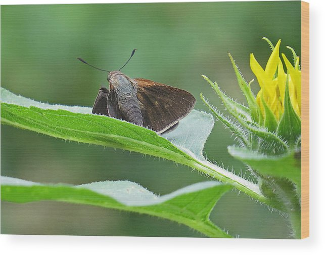 Blurred Wood Print featuring the photograph Moth Flower by Dart and Suze Humeston