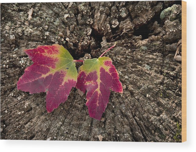 Natural Wood Print featuring the photograph Natures Detail by Cindy Rubin