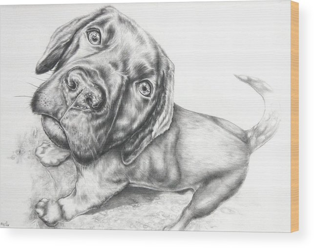 Dog Wood Print featuring the drawing Nosy by Helen Bennett