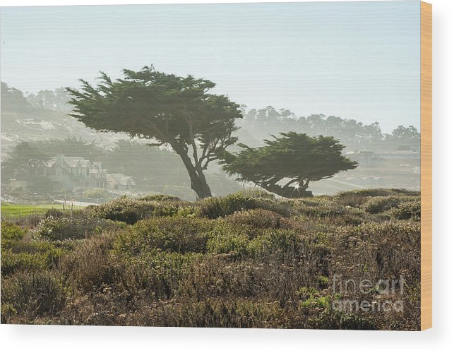 Pebble Beach Wood Print featuring the photograph Pebble Beach 1.6943 by Stephen Parker