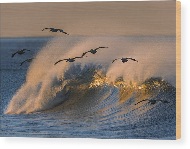 Orias Wood Print featuring the photograph Pelicans And Wave 73a2308-2 by David Orias