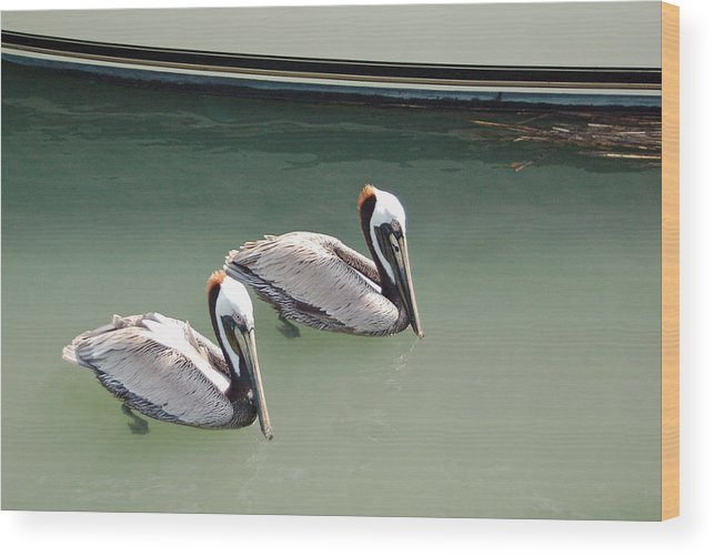Brown Pelican Wood Print featuring the photograph Pelicans Partners by Suzanne Gaff