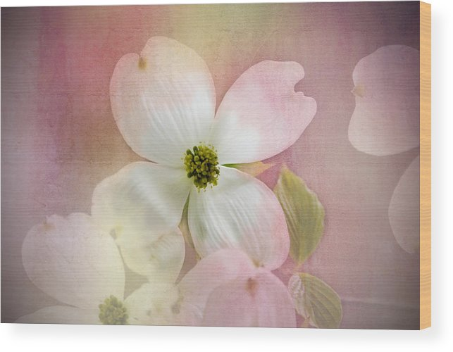 Pink And White Dogwood Blossoms. Pink And White Petals. Flowers. Pink And White Flowers. Photography. Poster. Prints. Greeting Card. Mother's Day Greeting Card. Texture. Green Leaves. Nature. Wood Print featuring the photograph Pink Dogwood Blossoms by Mary Timman