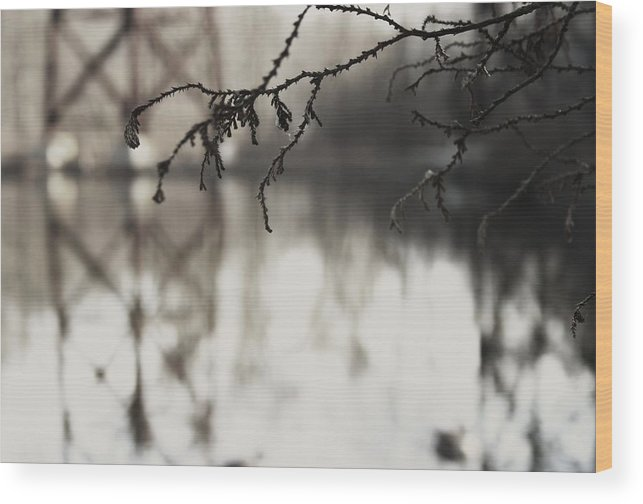 Pond Wood Print featuring the photograph Pond And Trestle by Robin Mahboeb