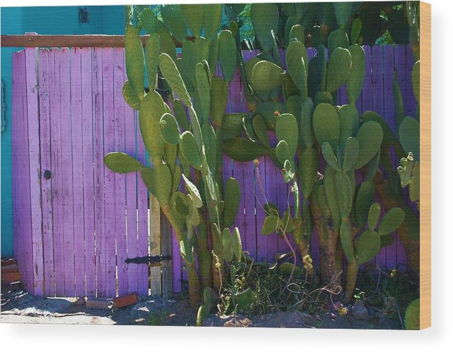 Cactus Wood Print featuring the photograph Prickly Pear Cactus by Richard Jenkins