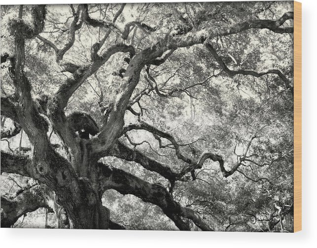 Abstract Trees Wood Print featuring the photograph Reaching For Heaven by Karen Wiles