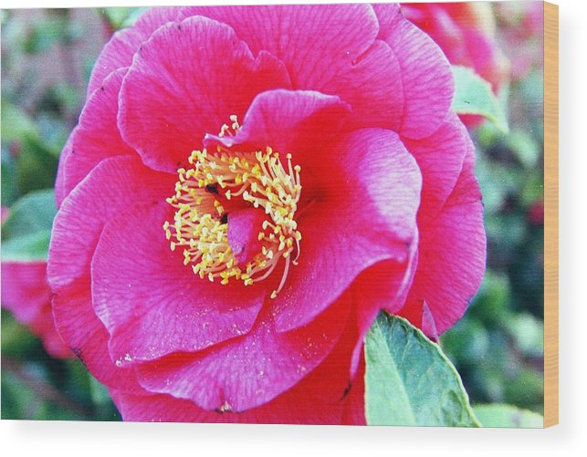 Macro Wood Print featuring the photograph Red Flower by Karl Rose