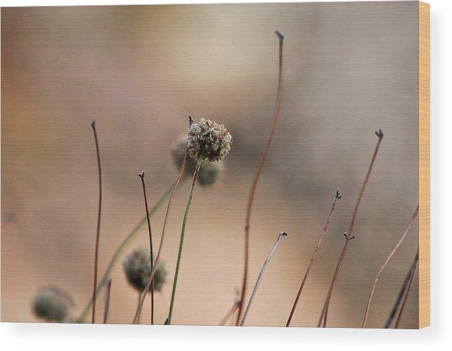 Flowers Wood Print featuring the photograph Romantic Feel by AR Harrington Photography