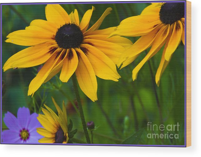 Wood Print featuring the photograph Sunshine by Timothy J Berndt