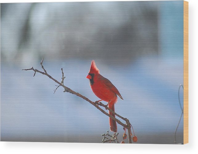 Red Wood Print featuring the photograph The Awesome Cardinal by Wanda Jesfield
