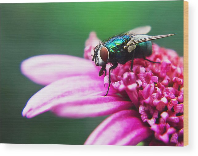 Photography Wood Print featuring the painting The Green Fly by Alex Art and Photo