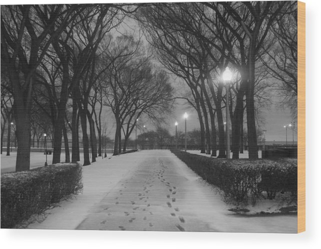 Winter Wood Print featuring the photograph The Winter Cathedral by Gregory Lafferty