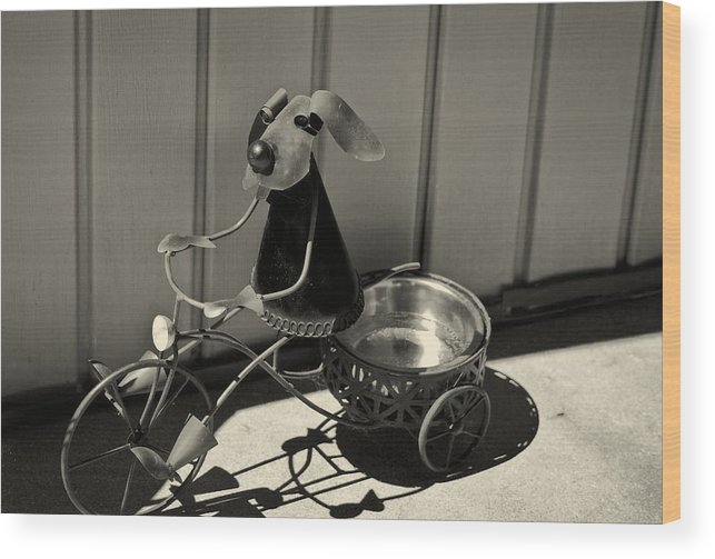 5d Mark Iii Wood Print featuring the photograph Tricycle Dog by John Hoey
