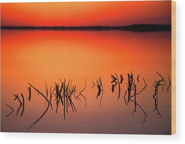 Art Morris Wood Print featuring the photograph Usa, Florida Silhouettes Of Dead Tree by Jaynes Gallery