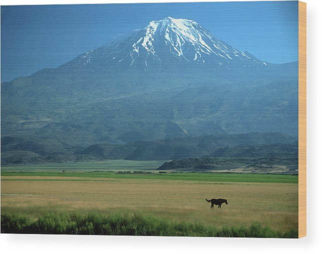 Anatolia Wood Print featuring the photograph View Of Mount Ararat In Turkey by Cagan H. Sekercioglu