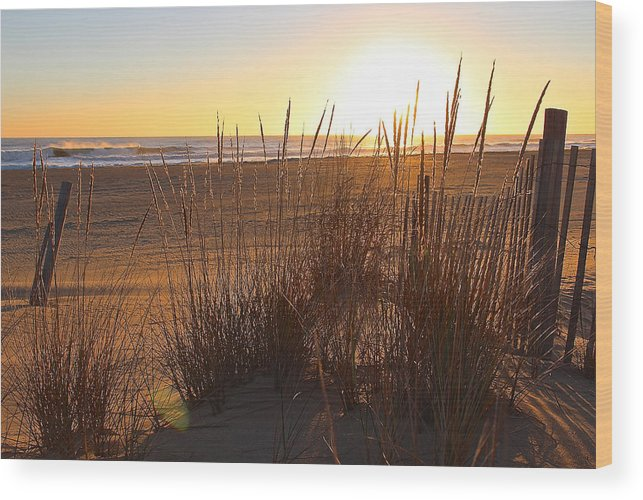 Wood Print featuring the photograph Warm Sea Grass by Sandbridge Sunrise