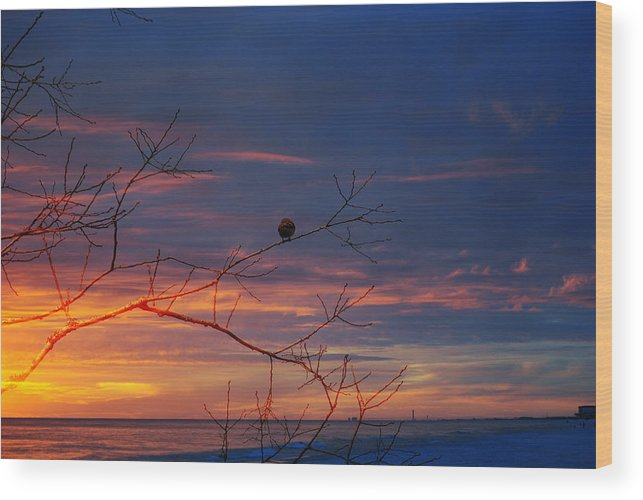Sunset Wood Print featuring the photograph Watching The Sunset by Michele Kaiser