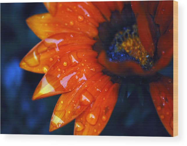 Daisy Wood Print featuring the photograph Wet Petals by Lori Tambakis