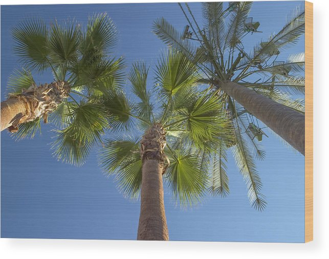 Palm Trees Wood Print featuring the photograph Which One Doesnt Belong 2 by Scott Campbell