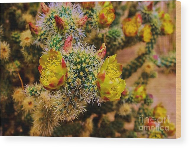 Whipple Cholla Wood Print featuring the photograph Whipple Snake by Angela J Wright