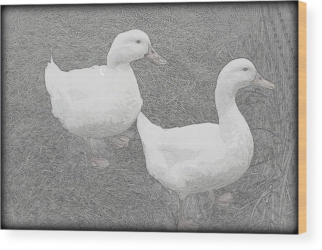 Duck Wood Print featuring the photograph Willie N Waddle by Kathy Sampson